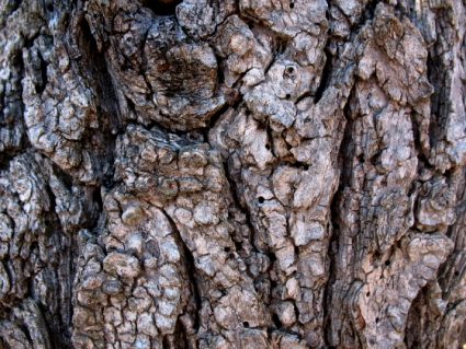 Tree Bark