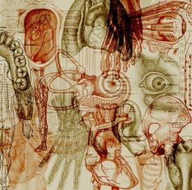 anatomy brushes