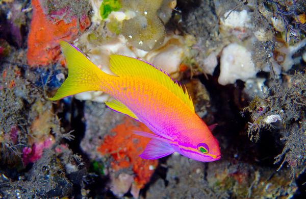 colorful fish - photo #28
