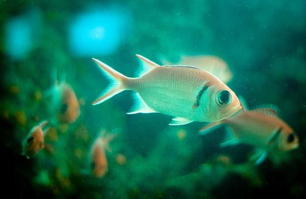Megapost fotograf as brillantes de la vida submarina for Virgin islands fishing