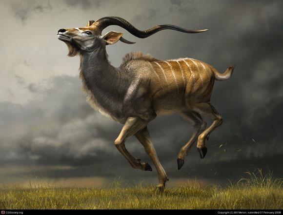 Charging-Kudu