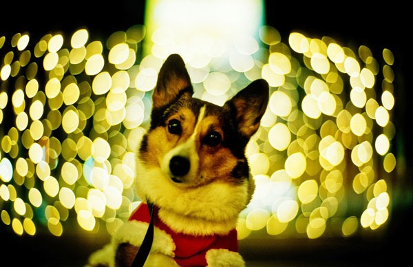 dog-wit-lights
