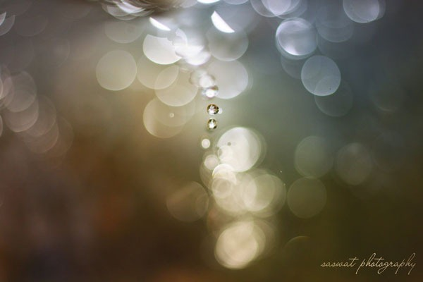 drops_of_bokeh_by_saswat777-d3gjieh