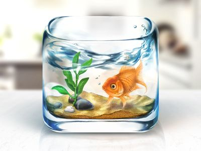 Fishbowl iOS Icon