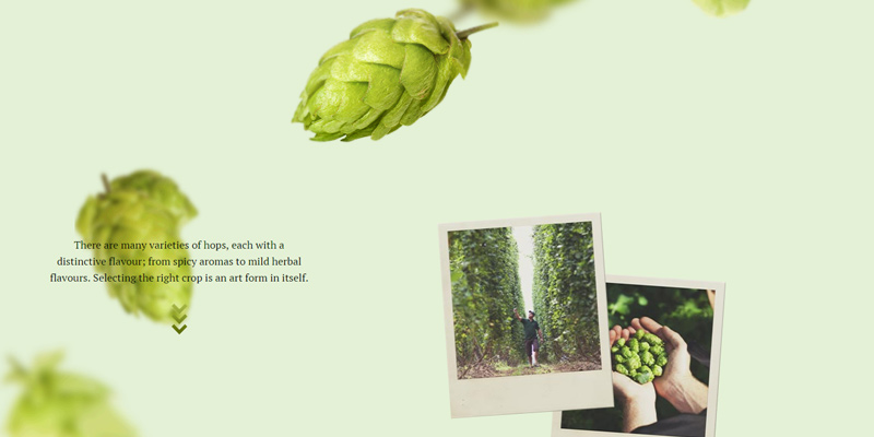 beauty of brewing parallax info website
