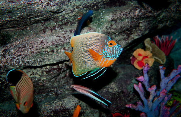 """""""Colorful tropical marine life underwater sea"""" by Dam ... 