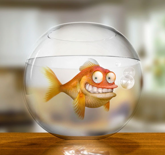 Klaus-the-German-Goldfish