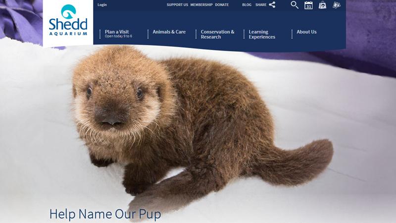 shedd aquarium blue website layout